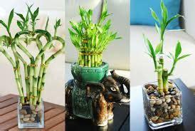 tanaman hias tanaman hias  meja
