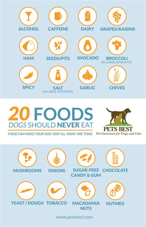 foods dogs should not eat 20 foods dogs should never eat infographic about town