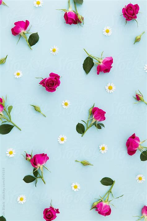 flower wallpaper next summer flower background by ruth black picture perfect
