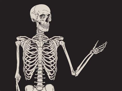 life  afterlife   bones