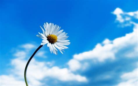 imagenes minimalistas de flores fonditos blanca flor minimalista paisajes minimalismo
