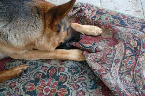 quanto costa lavare un tappeto quando un cliente effettua l acquisto di un tappeto non