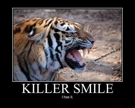 Tiger Memes - lol memes animal humor and tigers on pinterest