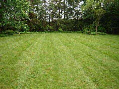 green grass landscaping turf