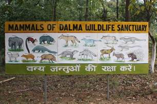 in search of sanctuary wildlife my books dalma wildlife sanctuary jharkhand a place to de stress