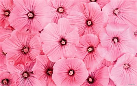 wallpaper floral pink floral wallpapers wallpaper cave