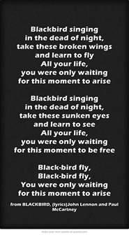 black beatles lyrics 119 best blackbird the beatles images on pinterest