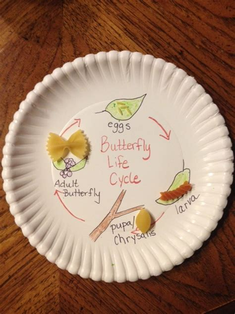 2nd grade crafts butterfly cycle activity education