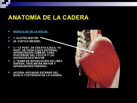 anatomia de la cadera anatomia de cadera 4