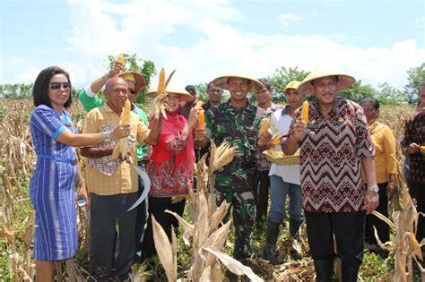 Importir Jagung Pakan Ternak kementan tak akan keluarkan izin impor jagung hingga akhir