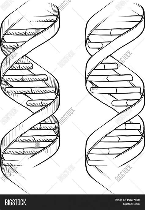 dna the helix coloring worksheet answers dna the helix coloring worksheet answers