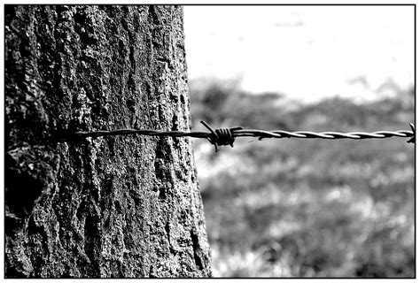 free images tree nature branch barbed wire black and