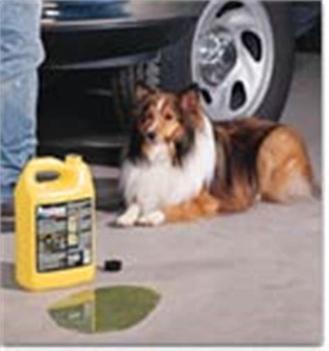 symptoms of antifreeze poisoning in dogs pet safety how to avoid antifreeze poisoning