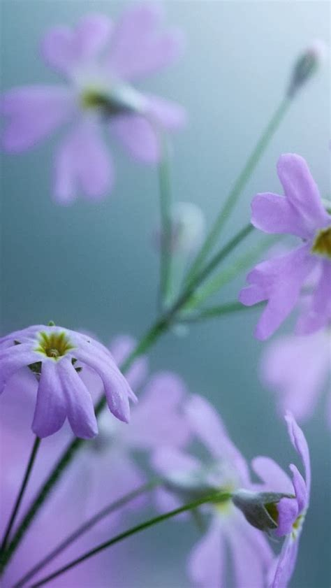 wallpaper flower iphone 5 iphone 5 hq wallpapers lovely purple flowers iphone 5 hq