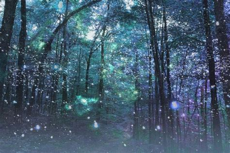 enchanted forest enchanted forest google search winter night garden