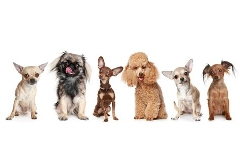 3742 dog hd wallpapers background images wallpaper abyss dogs 5k retina ultra hd wallpaper and background image