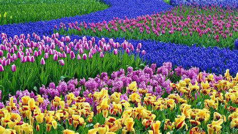 popular spring flowers desktop wallpaper spring flowers 60 images