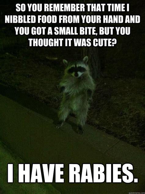 Funny Asshole Memes - asshole raccoon memes quickmeme