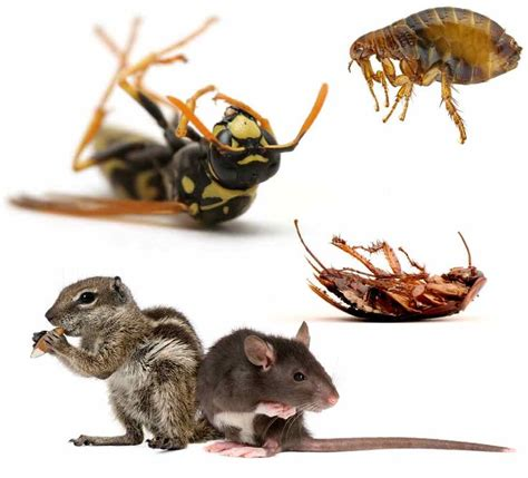 Casper Bed Bugs 165 Best Images About Pest On Signs Of