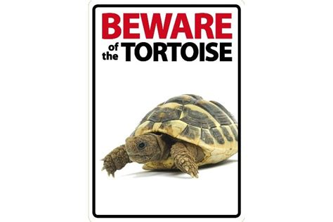 beware of the beware of the tortoise sign livefood uk ltd