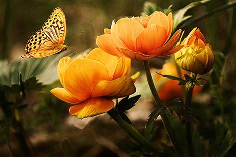 fiori d arancio significato il significato e la simbologia dei fiori d arancio