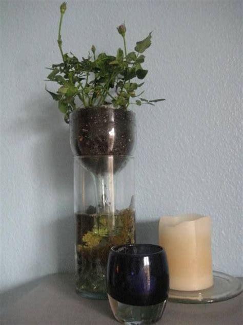 Diy Wine Bottle Planter by Diy Self Watering Wine Bottle Planter Tutorials