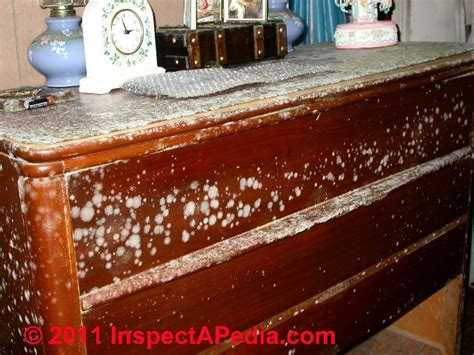 How To Clean Mold Wood Furniture by Mold Commonly Found In Indoor Dust Sles Mold On
