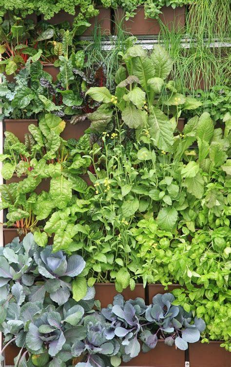 herbs on wall vertical herb garden nifty homestead