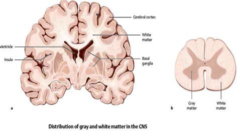 grey matter histology of nerve lab biology 100 with slavin at