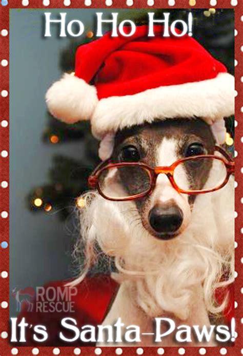 christmas card ideas   dog romp italian greyhound