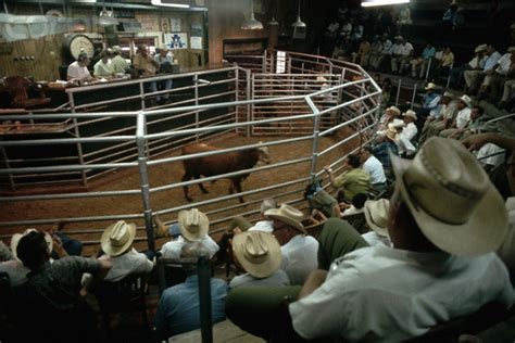 livestock auction birthday wish sondasmcschatter