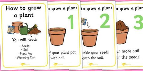 How To Grow A Plant Display Posters Plant Growth Topic How To Grow A Flower Garden