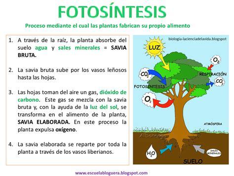 olguchiland las plantas ii las plantas fotos 205 ntesis