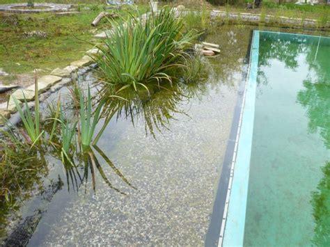 fadenalgen im schwimmteich fadenalgen im schwimmteich teichfilter f r den