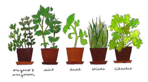 Kitchen Garden Seeds Recipes How To Grow Your Own Kitchen Garden Peaceful Dumpling