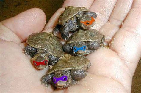 Cute Baby Turtles ? WeNeedFun