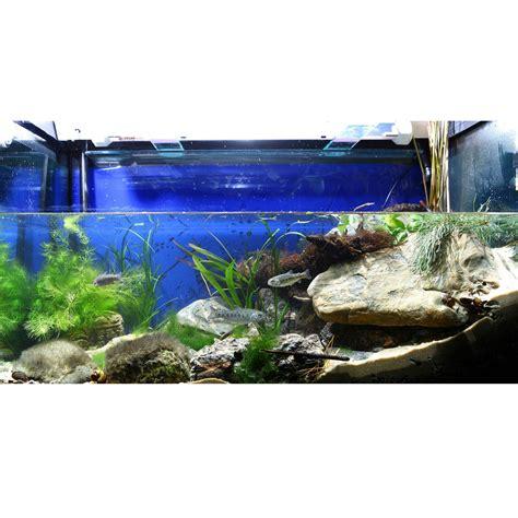 aquarium design tool cuisine tentant aquarium design aquarium design online