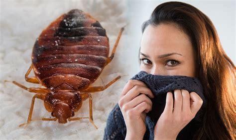 bed bug bites  sweet almond smell    infestation    rid