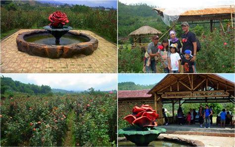 wisata petik bunga mawar gumur kids holiday spots