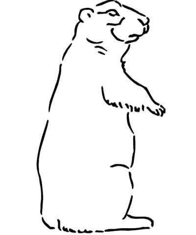 coloring page prairie dog prairie dog coloring page supercoloring com