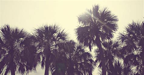 retro palm tree wallpaper gallery
