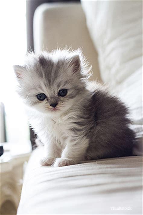 should i neuter my why should i neuter my kitten