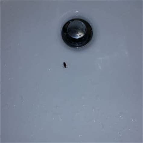 small roaches in bathtub wyndham houston hotel suites medical center 28 photos