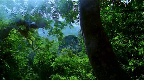 green wallpaper malaysia tier tropischer regenwald malaysia videokollektion in