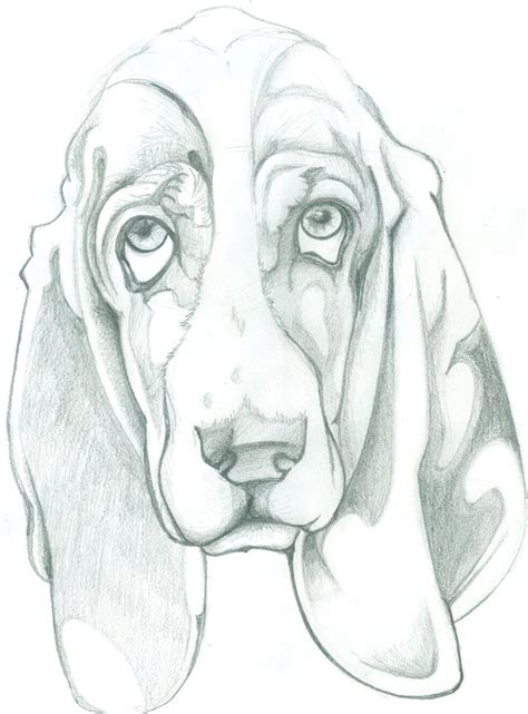 how to a hound how to draw hound