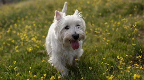 tiere suchen ein zuhause hunde zehn dinge die kleine hunde nicht m 246 gen tiere suchen