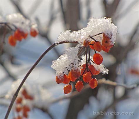 Beauty India Digital by Beautiful Snow Flowers Beauty Of Nature Beautiful Winter