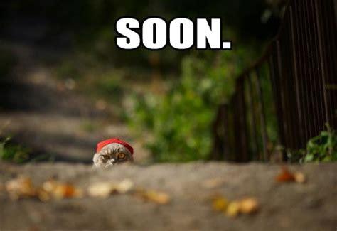 Meme Soon - 17 funny animal quot soon quot pictures 17 pics amazing creatures