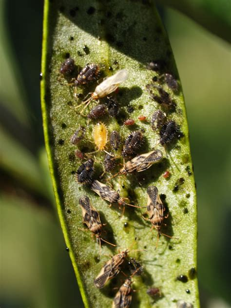 pests and diseases in plants organic pest and disease management tips for the home