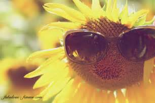 Sunglasses on sunflower endless field of sunflowers